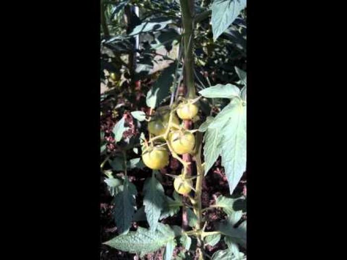 Рецепт компота из арбуза на зиму